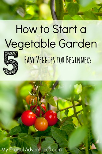 How to Start a Vegetable Garden 5 Easy Veggies for Beginning Gardeners