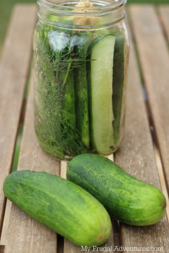 Homemade Pickles Recipe- so fast and easy!