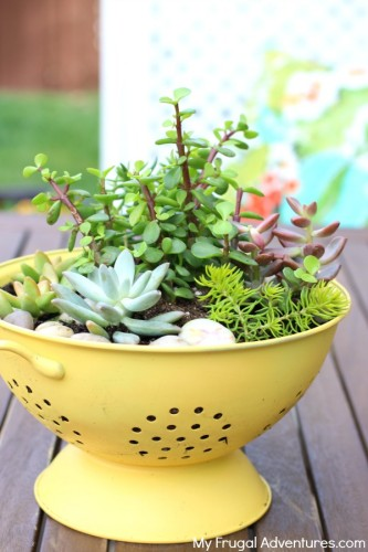 How to Make a Colander Planter