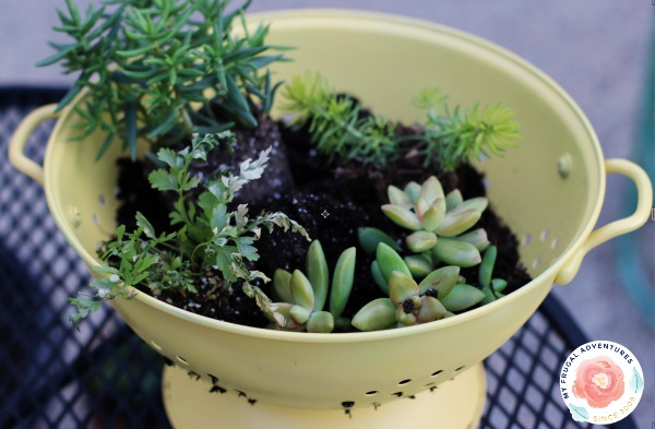How to Plant in a Colander
