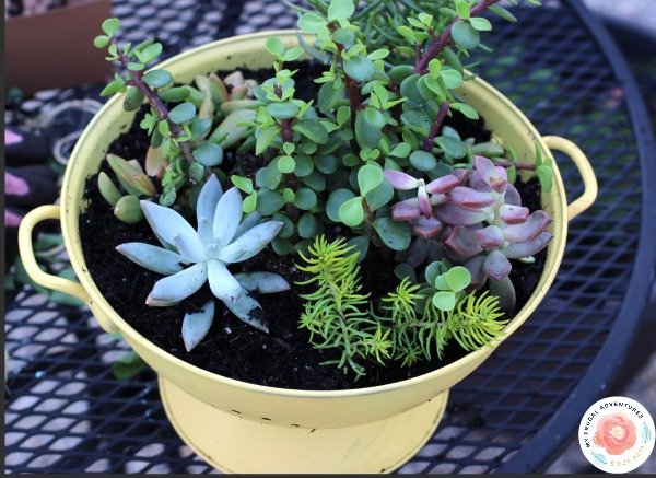 Succulents how to plant