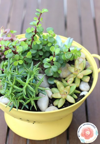 Upcycled colander planter