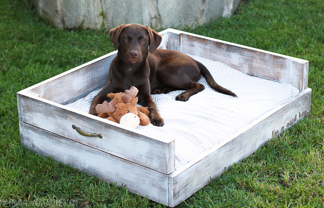 How to Make a Dog Bed - My Frugal Adventures