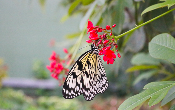 Butterfly Wonderland Scottsdale_