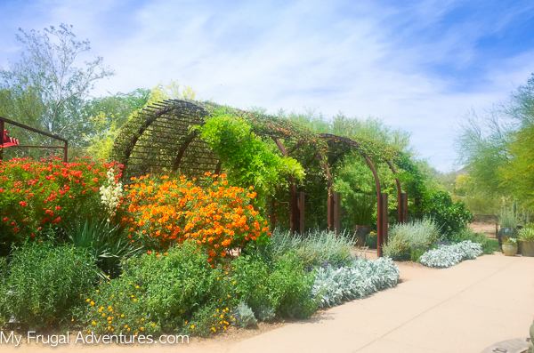 garden in scottsdale